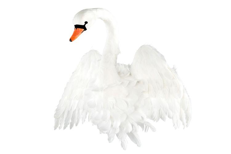 Djurhuvud -  Vit Svan med vingar