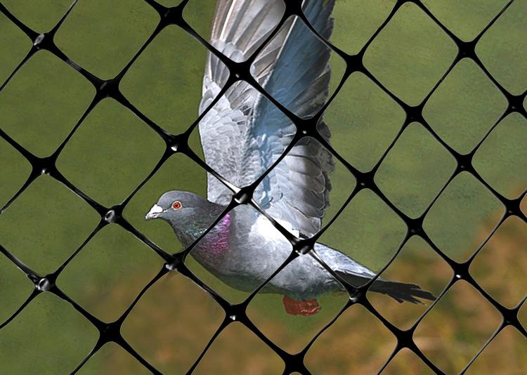 Rikstäckande hjälp mot fåglar,skadedjur. Offert