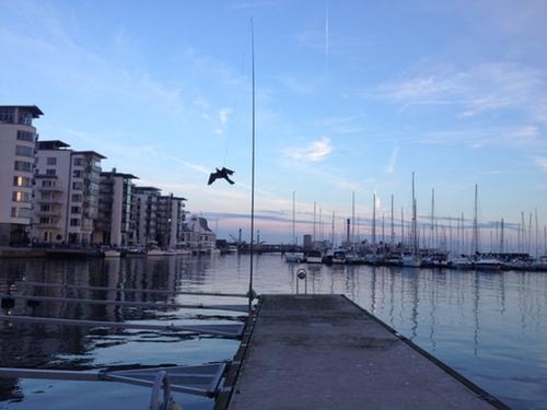 Fågelskrämma Komplett 2st 9 meter