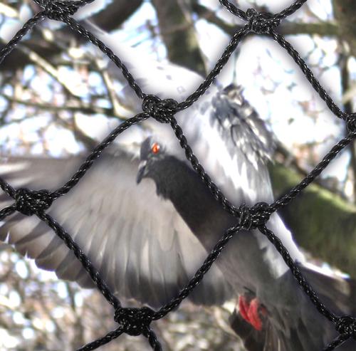 Fågelskydd / fågelnät. Maila in för offert. Olika priser på olika längder och bredder