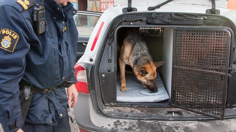 Modin-bed hundsängar  Camo