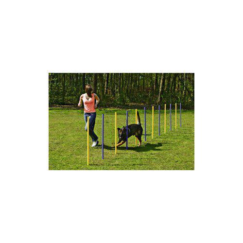 Hund agility slalompinnar