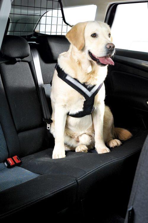 Bilbälte hund Mimsafe (krocktestad)