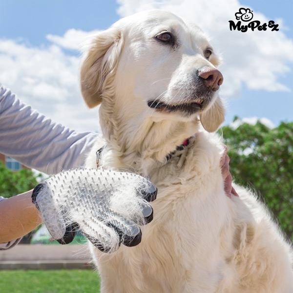 borsthandske-for-hundar-my-pet-petter