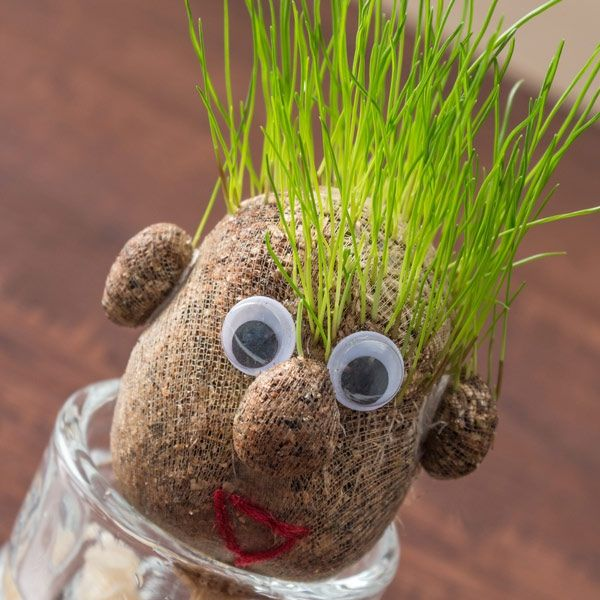 VÄXT GRASS HEAD