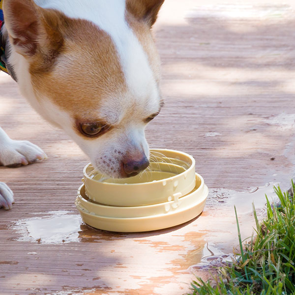 utdragbara-hundkopplet