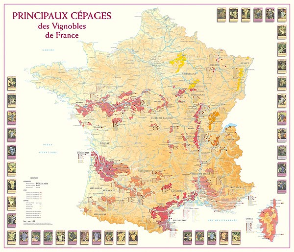 Vinkarta över de franska druvsorterna