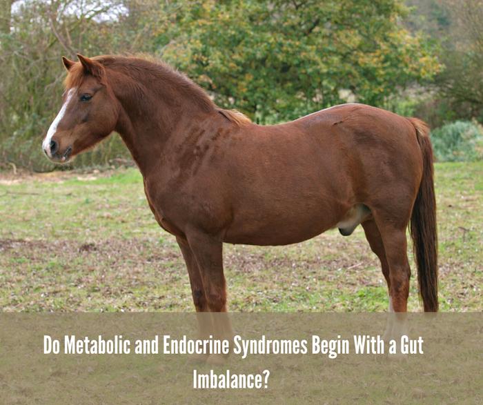 Varför analysera hästens mikrobiota - tarmfloran?