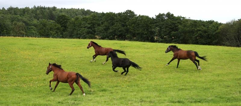 Öka hästens livskvalité