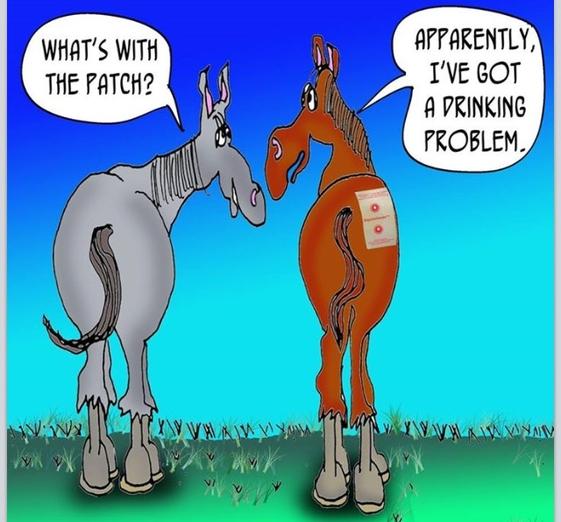 Equiwinner plåster för optimal vätskebalans hos häst