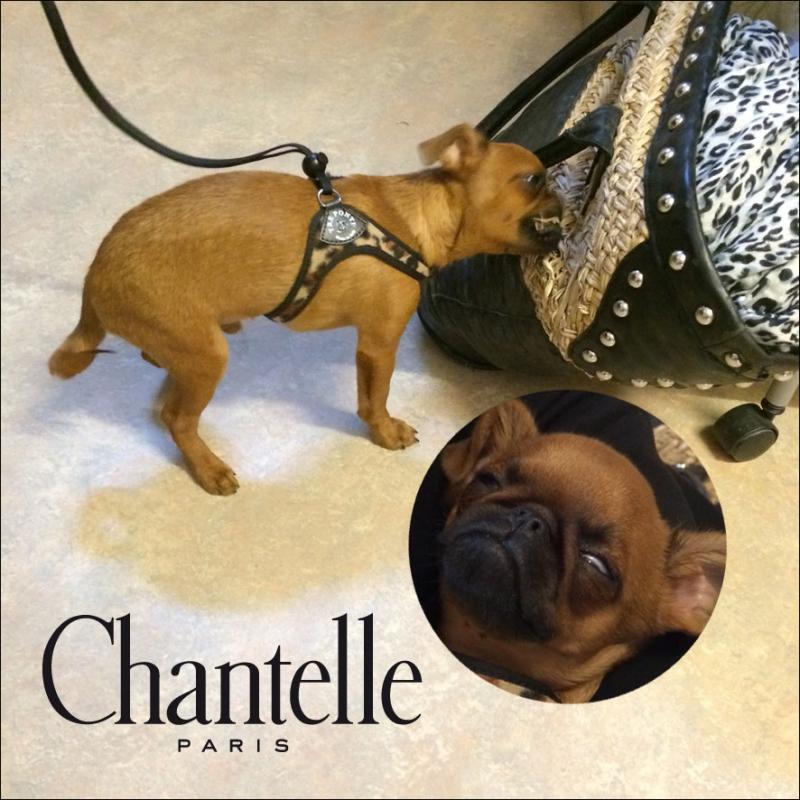 Säljmöte med Chantelle